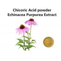 Chicoric Acid Plant Extract Powder Echinacea Purpurea Extract Enhance Immunity