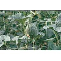 Climbing Plant Support Netting Green / White For Greenhouse , Garden