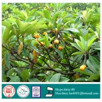 Buy cheap GMP 100% Natural Loquat Leaf Extract from wholesalers