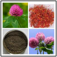 Buy cheap Red Clover Extract,soflavones 8% 20% 40%,CAS No.:491-80-5 from wholesalers
