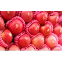 Buy cheap Delicious Fresh Yantai Red Fuji Apple No Spots With Suitable Sour / Sweet, timely delivery, team professionals from wholesalers