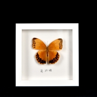 Buy cheap China factory square solid wood shadow box frame for butterfly marcos 3d molduras para fotos from wholesalers