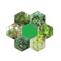 Green Tomato Plant Stakes / Tomato Plant Cage PE Coated Steel