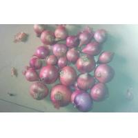 Buy cheap IQF Elongated Red Asian Shallots Full-Flavoured Health Benifits 2.5cm from wholesalers