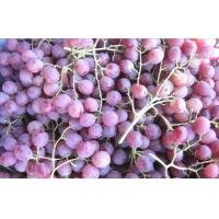 Buy cheap Delicious Fresh Purple / Red Globe Grapes Health Benifits Vitamin C , K , Fluoride from wholesalers