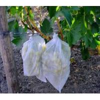 Buy cheap PP spunbond non woven farm cover fabric/Banana grow bag with 17gsm pp non-woven fabric/plant cover fruit bags from wholesalers