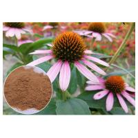 Anti-microbial anti-oxidation Echinacea pururea herb extract powder