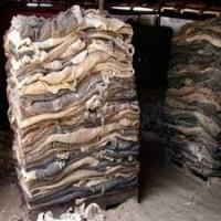 Buy cheap Wet Salted Donkey / Goat Skin / Horse / Salted Cow Hides from wholesalers