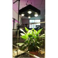 Buy cheap Led Grow Light Full Spectrum 250W  / Plant Vegetable Growing Lamp from wholesalers