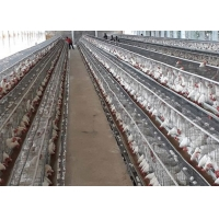 Buy cheap Cheap Price 3 Tiers 96 Birds Egg Battery Layer Zambia Poultry Chicken Cages from wholesalers