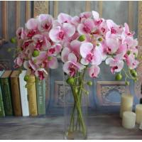 Buy cheap Small butterfly orchid,seven head butterfly orchid,Dried flowers, Simulation flowers, grass flower,Artificial flowers from wholesalers
