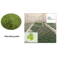 Buy cheap Nutrition Supplements 100% Pure Natural Chlorella Algae Powder And Spirulina Powder Improve Immunity product