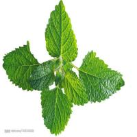 Buy cheap GMP Quality Natural Essential oils Peppermint oil from wholesalers