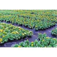 Buy cheap PP WOVEN GROUND COVER/WEED MAT/MULCH FILM MADE IN CHINA from wholesalers
