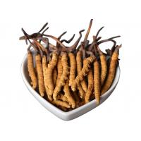 Buy cheap Cordyceps Sinensis Powder from wholesalers