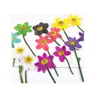 Buy cheap Unique Dried Flower Art Multi Color Teaching Specimens Plants For 3D Art Painting from wholesalers