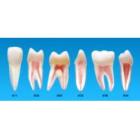 Buy cheap Cheap Endodontic Teeth Root Canal Treatment S12 product