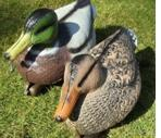 Buy cheap HUNTING DECOYS from wholesalers