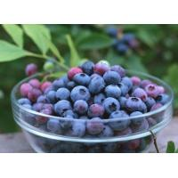 Buy cheap Supply Bilberry extract/Blueberry Extract 25% Anthocyanosides powder from wholesalers