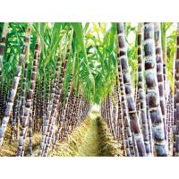 Buy cheap Top Quality 100% natural 98% Octacosanol sugar cane extract -Sugar Cane Wax from wholesalers