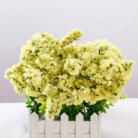 Buy cheap Fresh cut flowers shop yellow myosotis flower for wedding from flower base long time flower gifts from wholesalers
