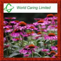 Buy cheap Herbal Extract 4% Polyphenols Echinacea Purpurea Extract HPLC from wholesalers