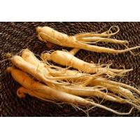 Buy cheap Panax Ginseng P.E., Ginsenosides 10%HPLC, enhance immunity,Anti aging and Anti tumor, benefit liver,Chinese manufacture from wholesalers