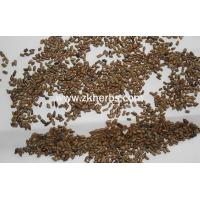 Buy cheap Chinese Medical Herb The Seed of Semen Cassiae/ Catsia tora Linn(cao jue ming) from wholesalers