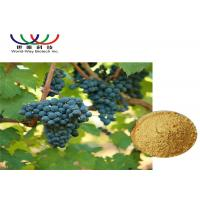 Buy cheap Pure Grape Skin Extract Vitis Vinifera Powder , Resveratrol Plus Red Wine Extract from wholesalers