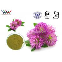 Buy cheap Trifolium Pratense L Red Clover Extract Green Powder Relieve Menopausal Symtoms product