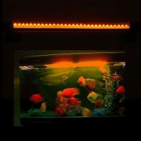Buy cheap Custom 7W Par38 AC85 - 264V 12000k LED Reef Aquarium Light bar  from wholesalers