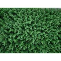 Buy cheap artificial plant wall from wholesalers