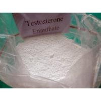 Bodybuilding Testosterone Anabolic Steroid Testosterone Enanthate Cas 315-37-7