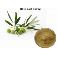 Buy cheap Natural Olive Leaf Extract For Kids , Organic Olive Leaf Extract Blood Pressure from wholesalers