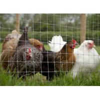Buy cheap High tensile field fence for horse and deer fencing from wholesalers