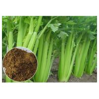 Buy cheap 80 Mesh Celery Extract Powder , Celery Seed Apium Graveolens Extract For Arthritis from wholesalers