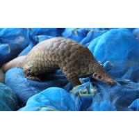 Buy cheap Outdoor garden sculptures statues  pangolin toy model fiberglass nature painting as decoration statue in garden from wholesalers
