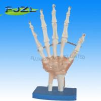 Buy cheap Life-Size Hand Joint with Ligaments product