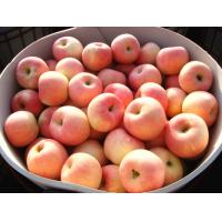 Buy cheap Sweet Fresh No Wounds Organic Fuji Apple Contains Vitamin C , Vitamin B6, pericarp thick and tough from wholesalers