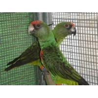 Buy cheap bird cage chicken wire mesh from wholesalers