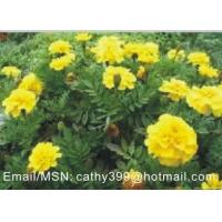 Buy cheap plant extract --- Marigold P.E. product