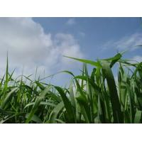 Buy cheap Green Barley Juice Extract from wholesalers