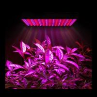 Buy cheap Marijuana Full Spectrum LED Grow Lights Dimmable For Growing Plants Indoors product