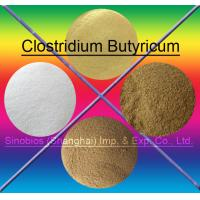 Buy cheap Brown 10BI CFU/G Clostridium Butyricum Feed Probiotics For Animals SEM-CB10BI from wholesalers