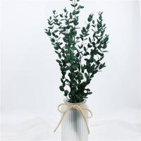 Buy cheap Artificial Dried Eucalyptus Plant , Preserved Silver Dollar Eucalyptus from wholesalers
