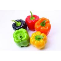 Buy cheap Capsicum annuum Extract, Cayenne fruit extract, 10:1 TLC, Chinese manufacturer, Shaanxi Yongyuan Bio from wholesalers