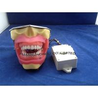 Buy cheap Conduction Anesthesia Model for practice extract and anesthesia from wholesalers