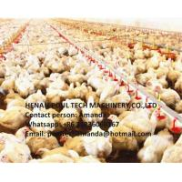 Buy cheap Poultry Farm Broiler Slatted Floor Raising System with Feeding Pan System & Drinking System in Chicken House from wholesalers