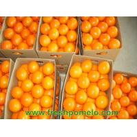 Buy cheap navel orang,pomelo,other citrus fruits from wholesalers
