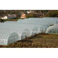 Buy cheap Single High Tunnel Greenhouse on Sale from wholesalers